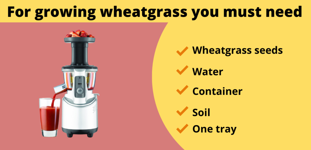 For growing wheatgrass you must need these steps